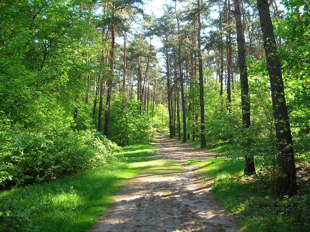 Pin Zdjęcia Lasu Lasy W G&243rach Krajobras Leśny Drzewa R&243żnych